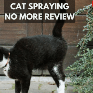 Cat Spraying No More Review 2021 – Does It Really Work For you?